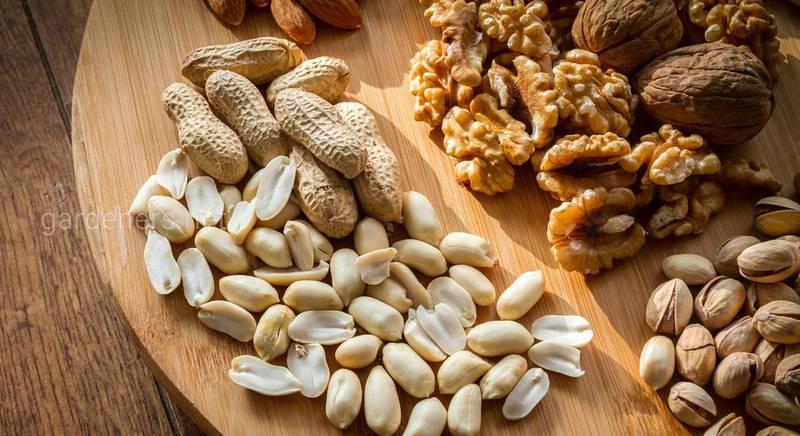 Что несут орехи – пользу или вред