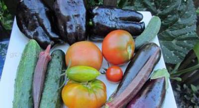 огурцы,томат, бамия.jpg
