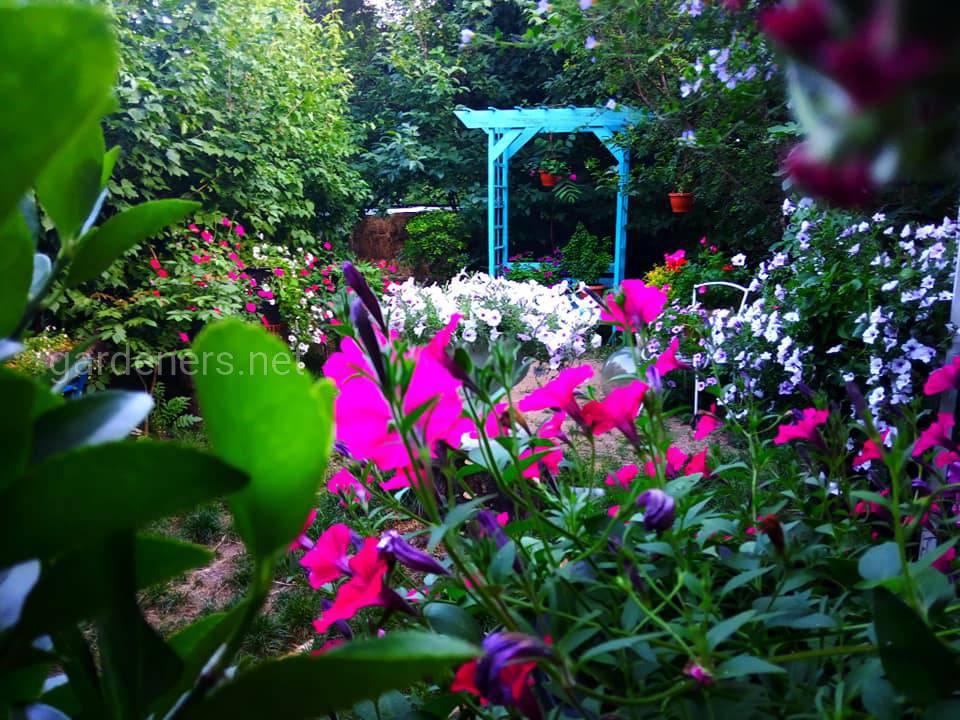 Сад мечты