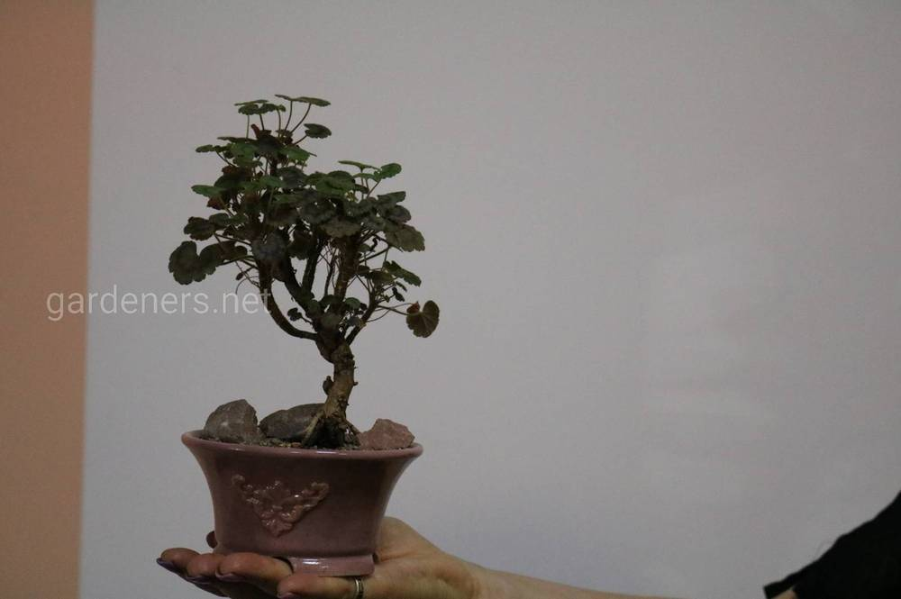 Растения в терракотовых кашпо