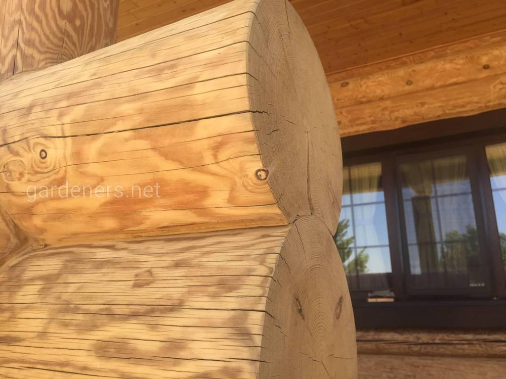 Как спасти дом от насекомых, уничтожающих древесину