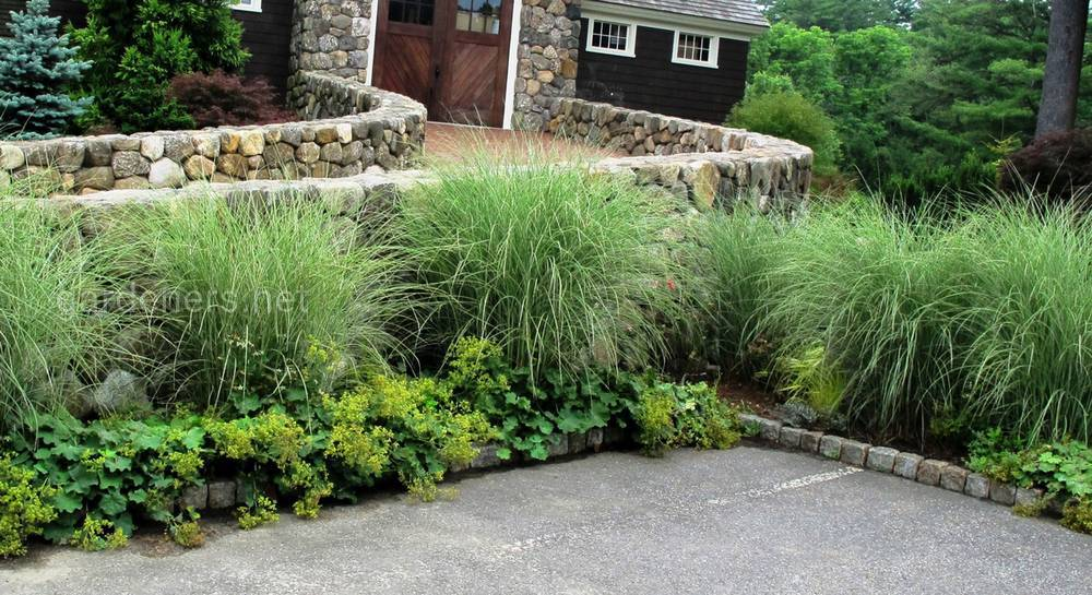 Декоративные злаки в саду: варианты использования, фото