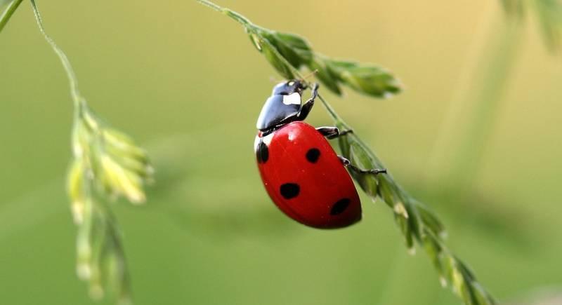 Какие насекомые помогут защитить наш сад и огород?