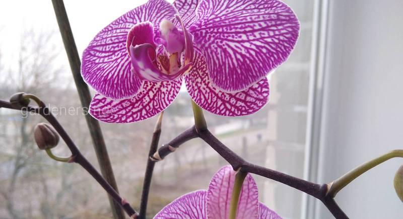 Орхідеї: цікаві факти