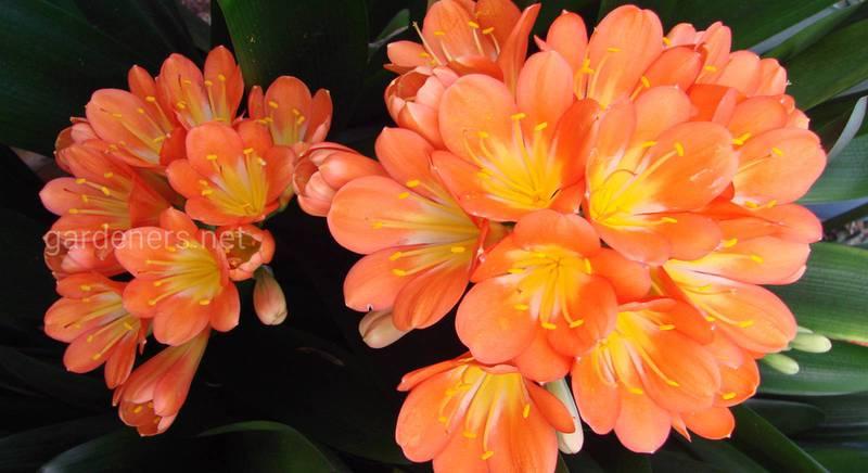 ТОП-21 рослина, котрі не бояться сухого повітря в квартирах зимою