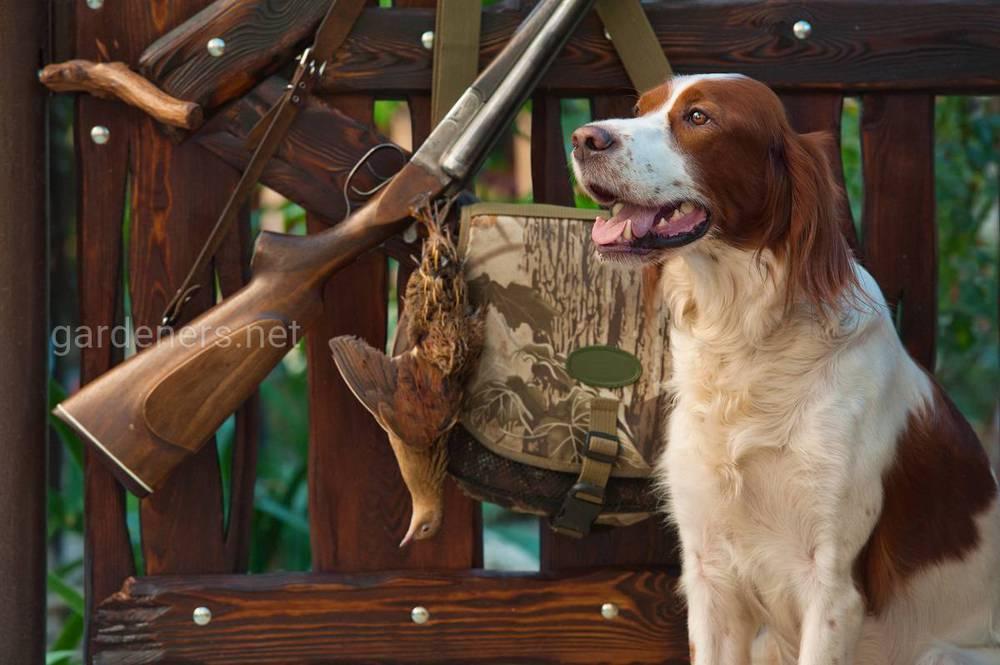 Собаки та полювання