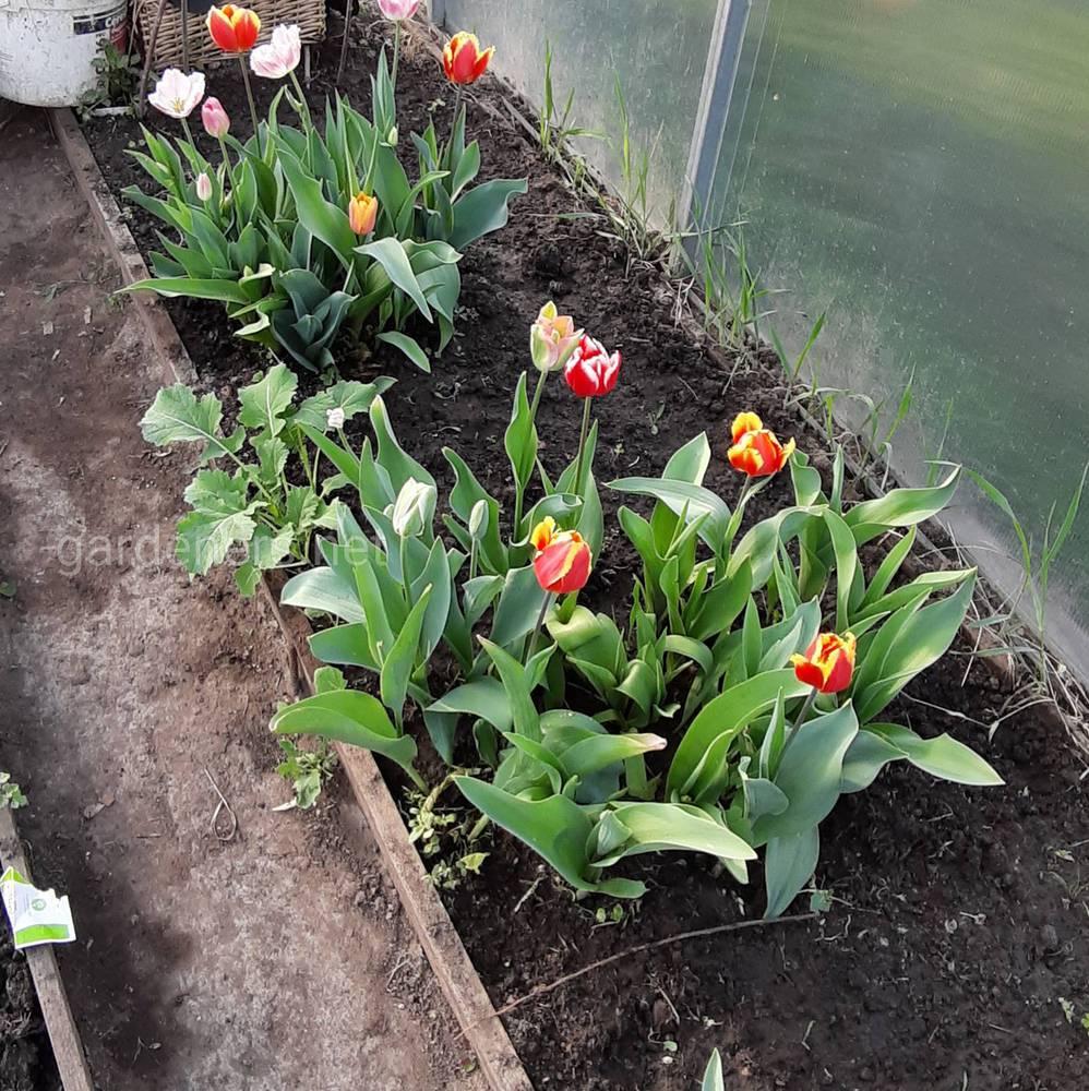 Увлечённый садовод