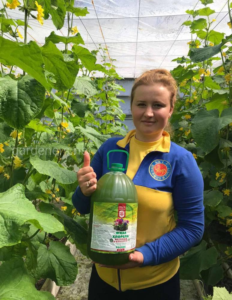 Fresh Hub - ферма органических продуктов в городе Одесса.