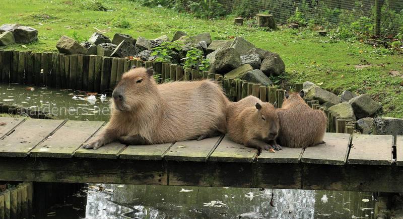 Екзотичний домашній зоопарк і його мешканці