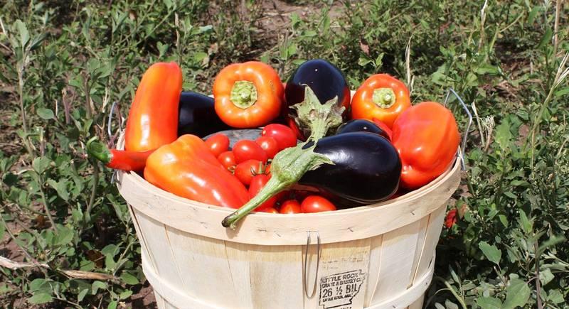 harvest-944769_1920.jpg