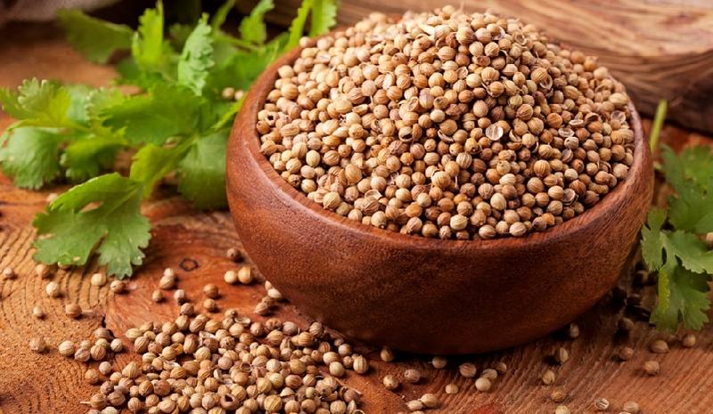 Как правильно сеять, ухаживать, защищать и собирать урожай кориандра?