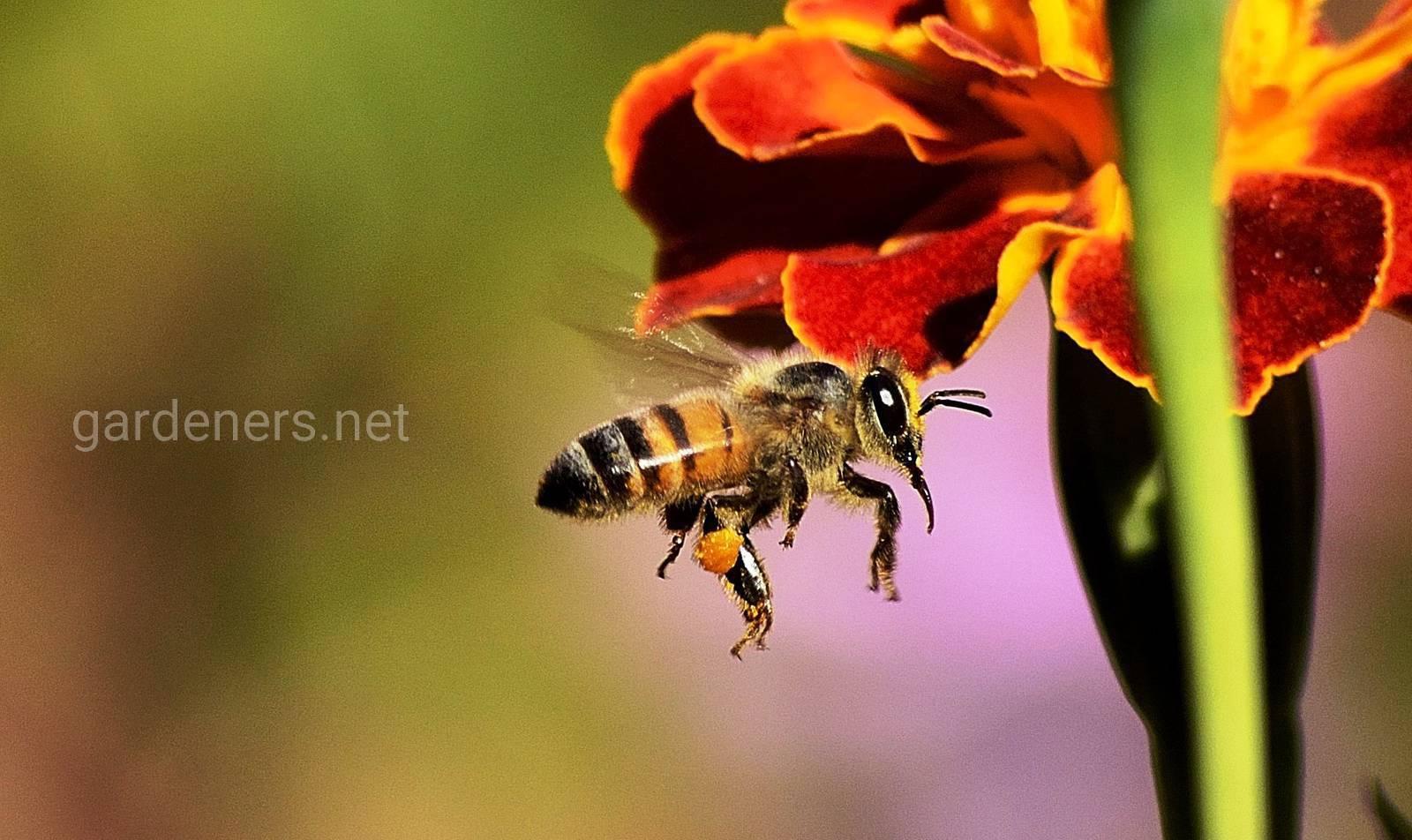 уход за пчелами.jpg