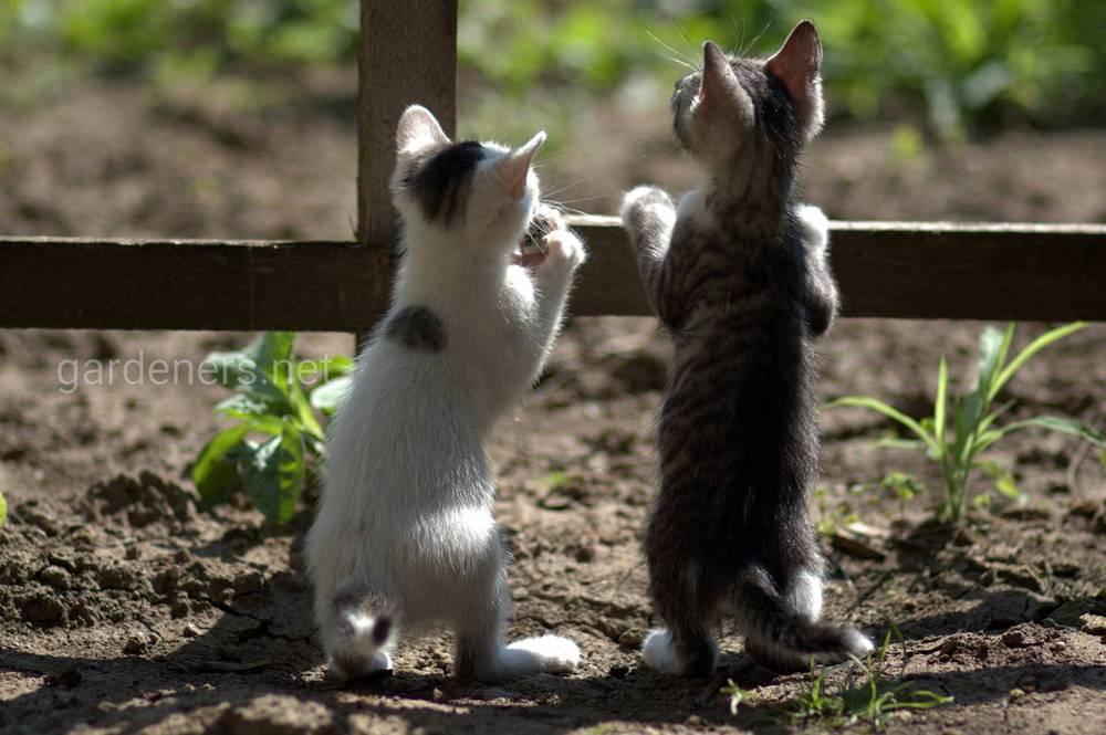 Коты на участке
