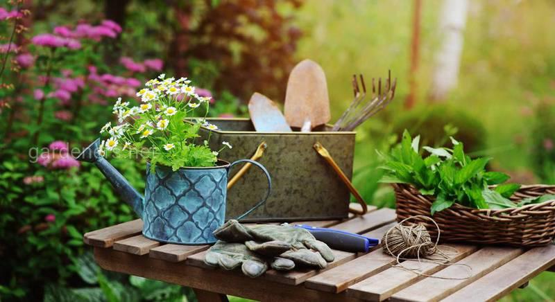 ТОП-20 работ на садовом участке в августе