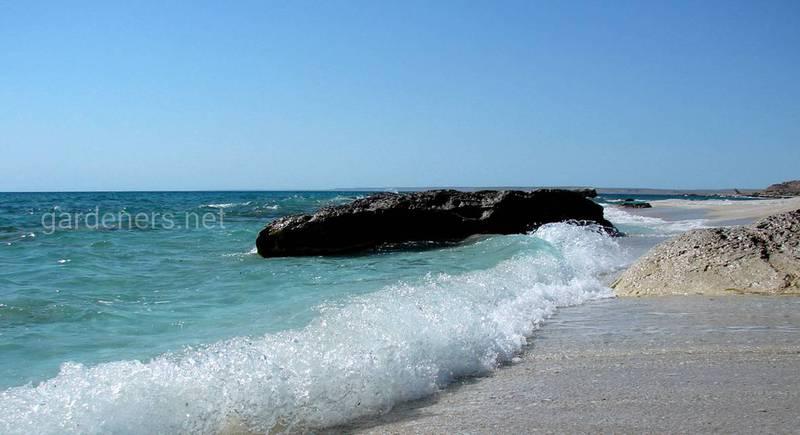 15 цікавих фактів про Каспійське море