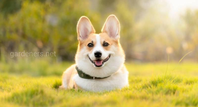 ТОП-10 кормів для собак різного віку