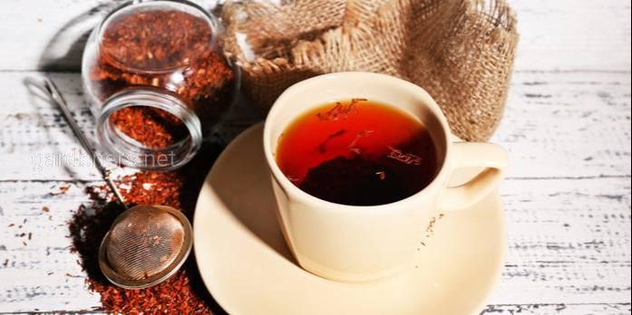 Чай ройбуш (червоний) - багатий поліфенолами та не містить кофеїну
