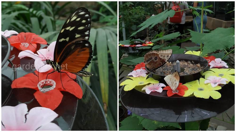 Бабочки_еда