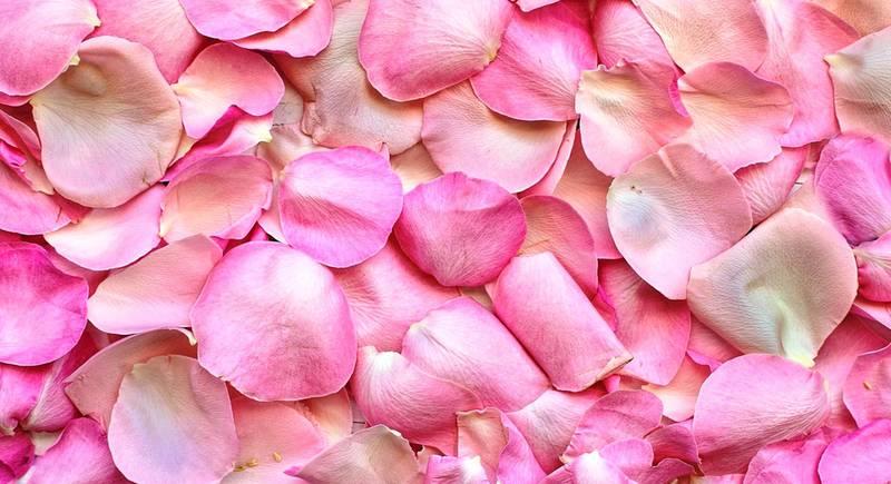 лепестки роз.jpg