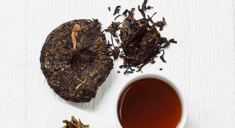 Все про китайський енергетичний чай пуер: від вирощування до секретів заварювання