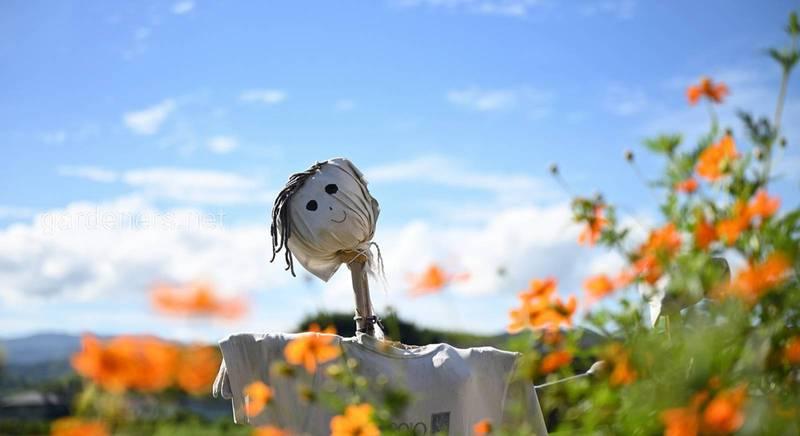Пугало огородное: как защитить урожай от птиц