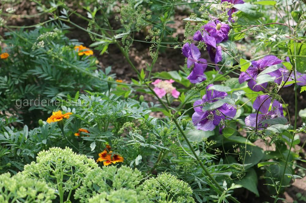 Очиток и цветы
