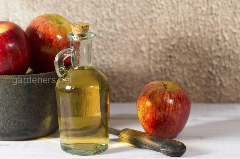 Из яблок можно приготовить вино