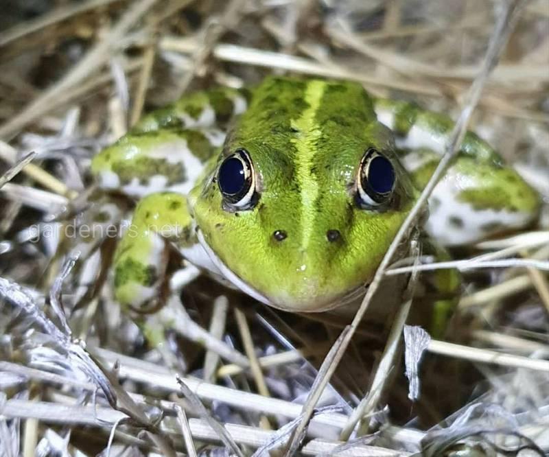 Как привлечь лягушек в сад и огород?