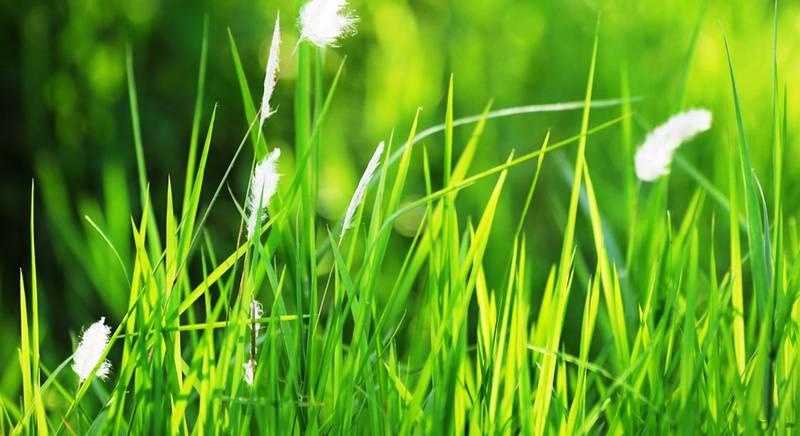 Выбираем газонную траву: сорта, смеси и их характеристики