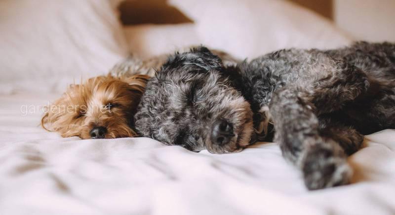 Собака з притулку