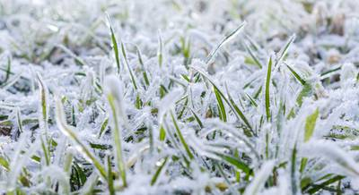 Как не навредить газону зимой