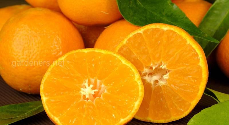 Топ рецептів десертів з апельсина, які урізноманітнять ваш день