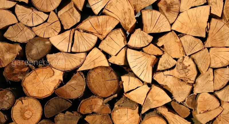 Хранение дров: ТОП 6 правил и 5 способов
