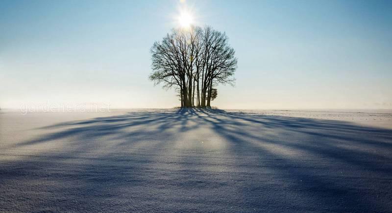 Чи потрібно закидати сніг у теплицю