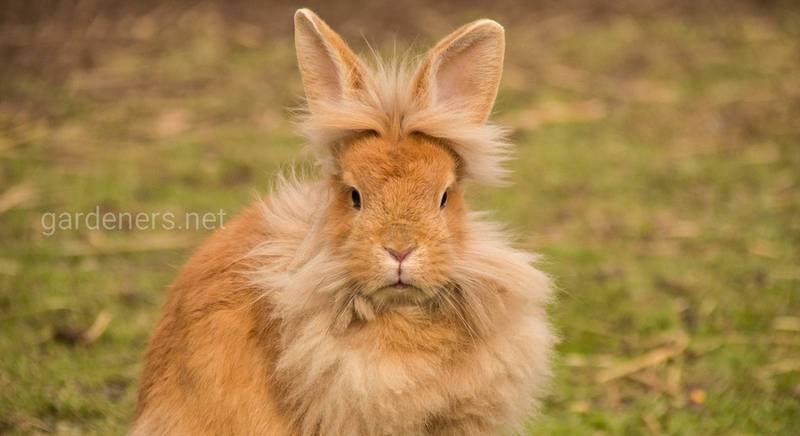 Якою травою можна і не можна годувати кроликів