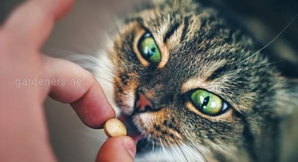 Как дать таблетку кошке? Интересные факты и советы для применения в домашних условиях.