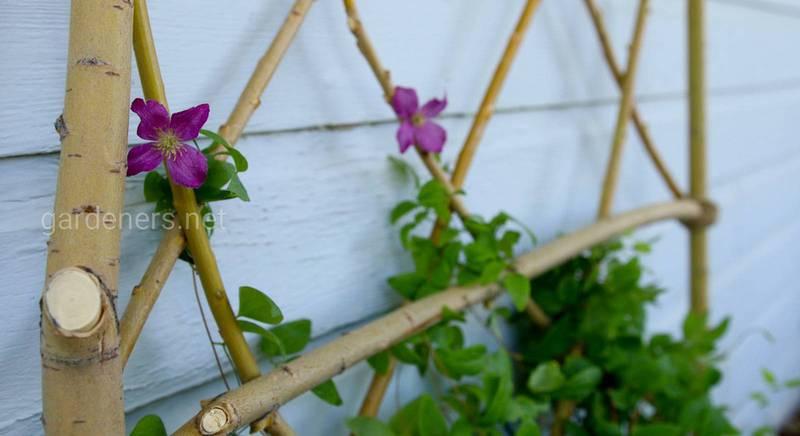 Шпалера для в'юнких рослин своїми руками