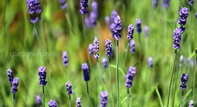 Растения-обереги.jpg