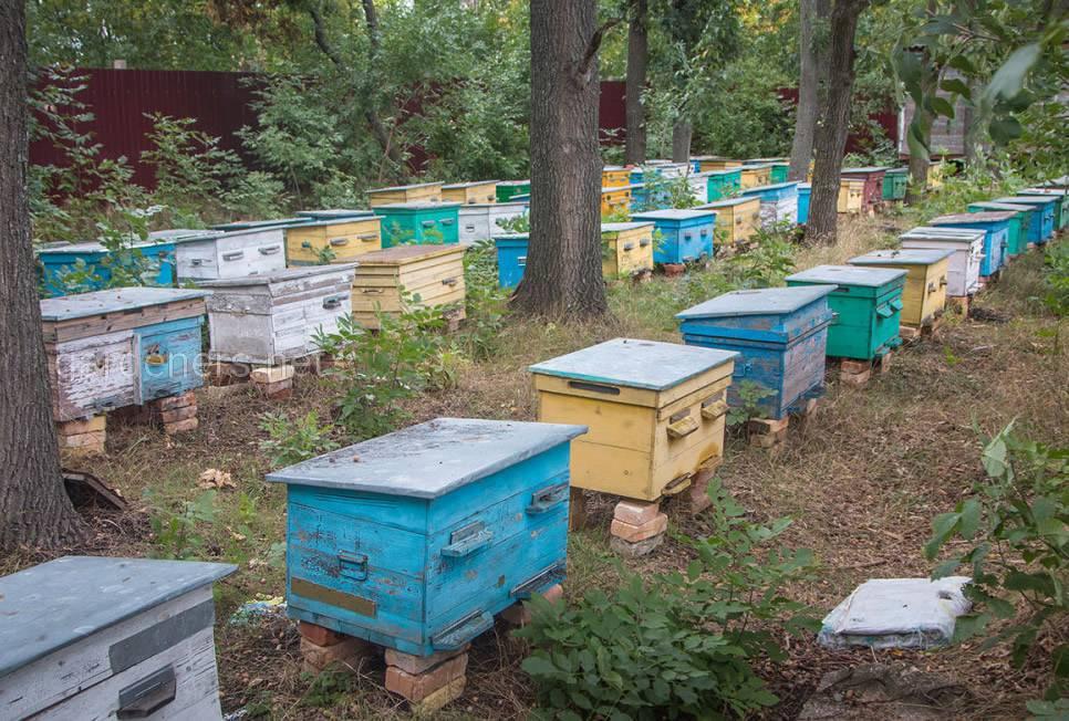 улики с пчелами