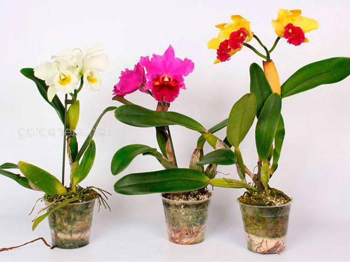 Какие комнатные растения цветут круглый год?