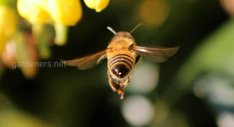 Чем кормить пчел: виды и типы медосбора, особенности разных периодов пчеловодного сезона