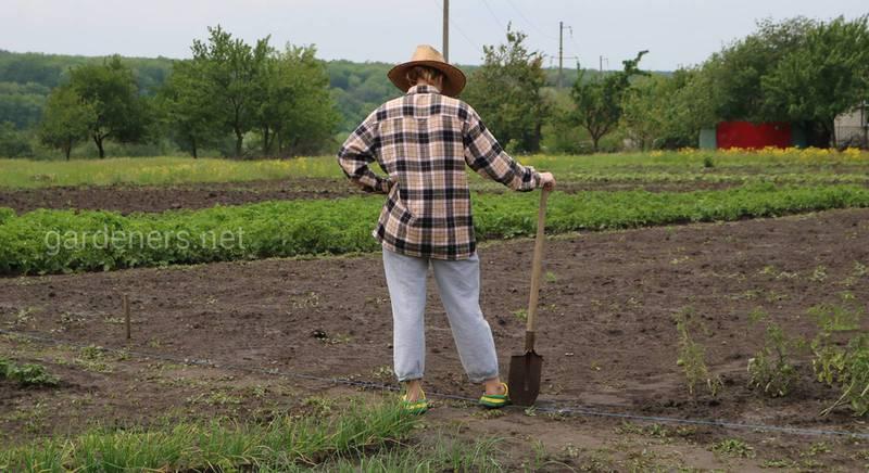Осень: пришло время восстанавливать почву