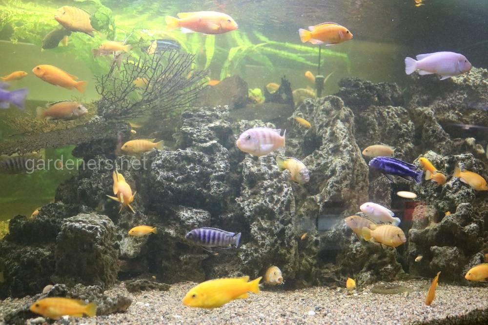 выставка рыбок