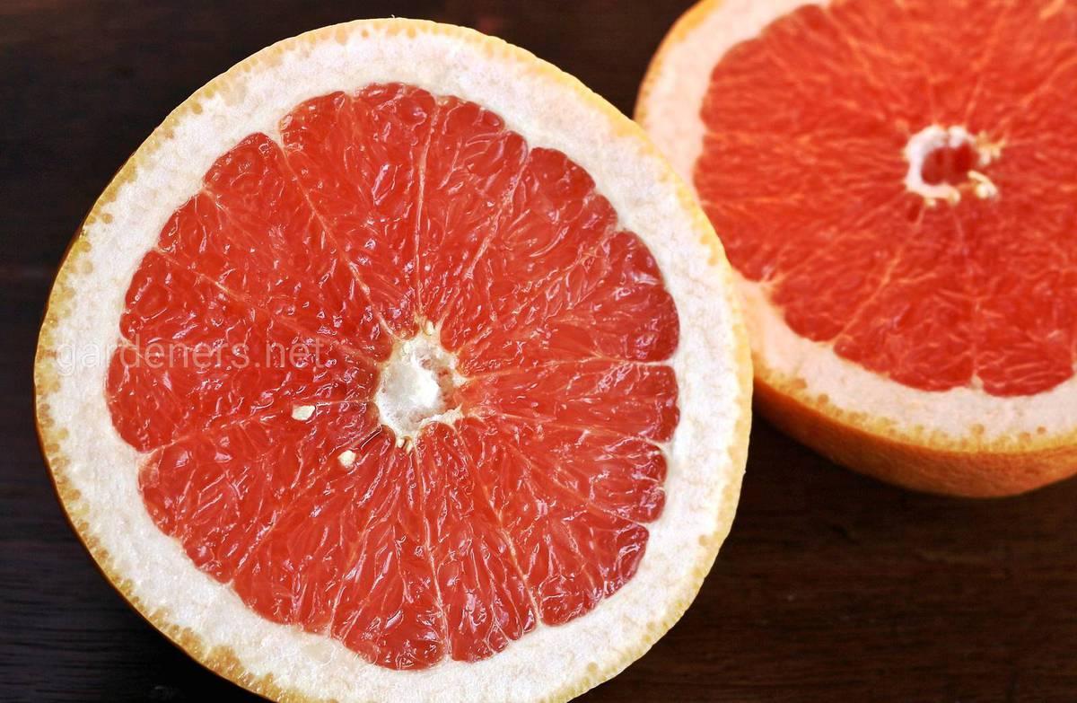 грепфрут