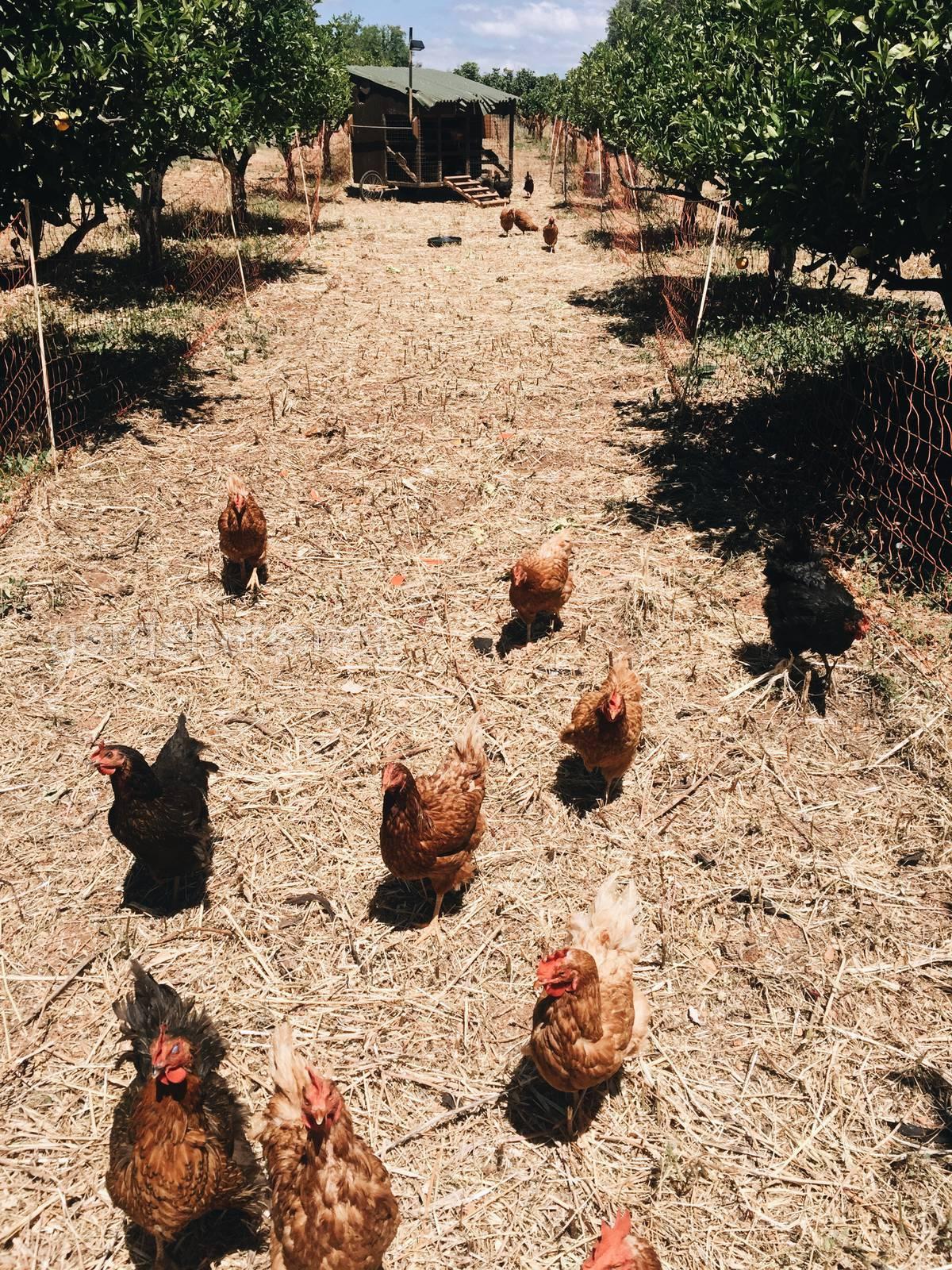 Vale da lama farm