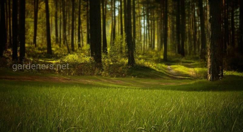 Правила безпечного відпочинку в лісі