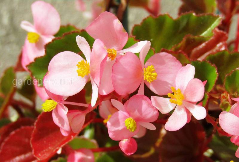 Какие цветы подойдут для выращивания на южной и западной террасе?