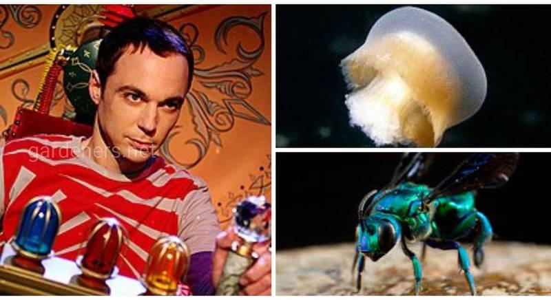 Медуза та бджола на ім'я Bazinga, чи просто - бугага!