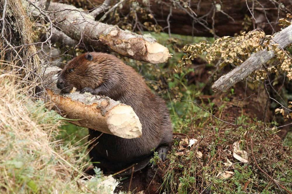 Факти про лісових тварин