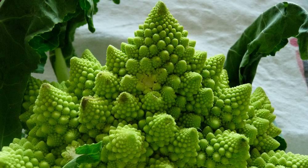 Капуста романеско – выращивание и уход, полезные свойства